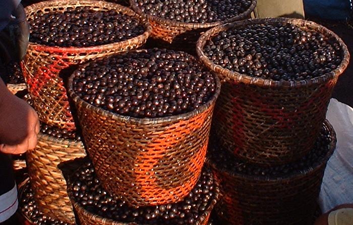 Ягоды асаи — панацея или необычный продукт?
